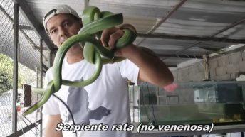 5 Serpientes