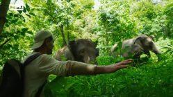 Un buen susto Elefantástico