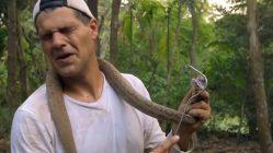 Mortífero ataque de serpiente Russell