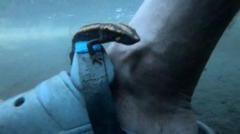 Ajolotes y otros anfibios