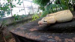 Una serpiente como mascota
