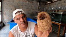 Tejedor Dorado Asiático - Maravilla de la naturaleza