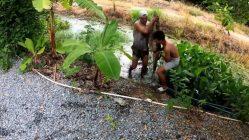 Un lagarto de 40 kilos - Monitor de agua