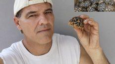 Tortugas de Burma